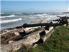 Fort Ebey driftwood