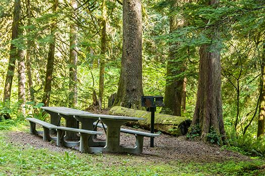 Federation Forest picnic area
