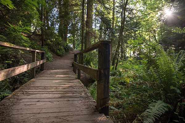 Larrabee wooden foot bridge with trail