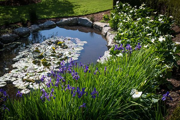 Peace Arch pond with flowers