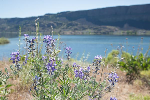 Steamboat Rock wildflowers