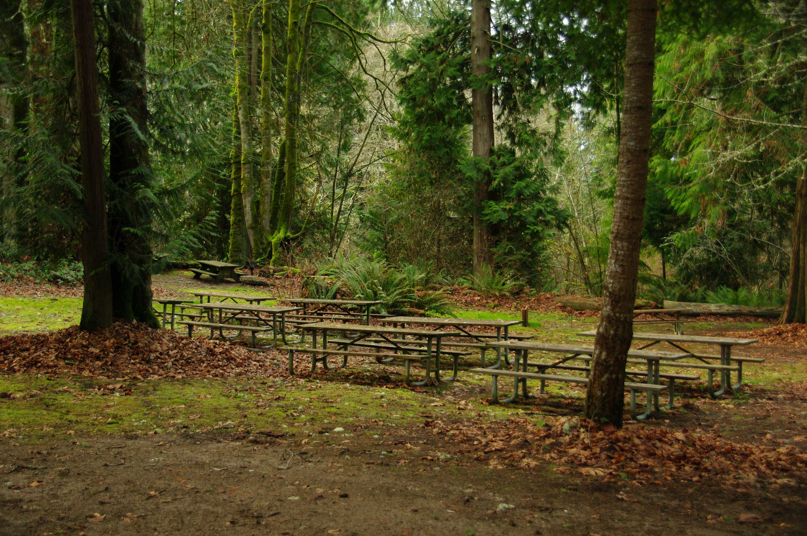 picnic-tables-in-woods