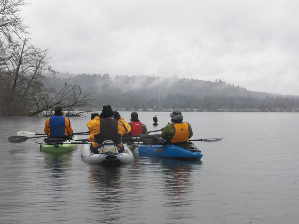 Friends of Lake Sammamish Kayak Nature Tour