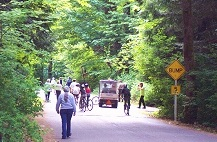 People and bicylists on a paved trail that runs between trees