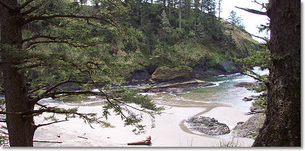 Sandy beach strewn with driftwood and bordered by lush hillsides leading into the Pacific Ocean at C
