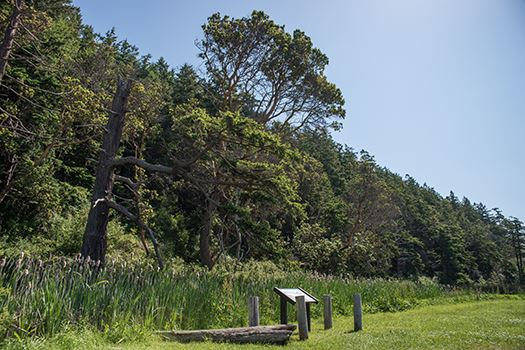 Camano Island interpretive trail