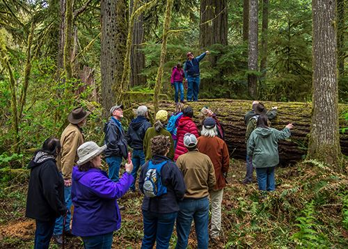 Image of people on a Deep Forest Experience hike at Rockport State Park