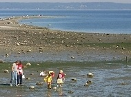 Beachcombing at Washington State Parks